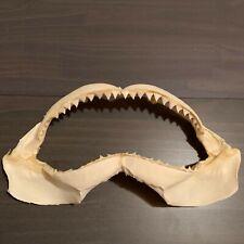 "13"" Bull Shark Jaw Carcharhinus leucas Beach Nautical Decor Big Shark Jaw"
