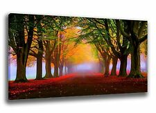 Large Wall Art Canvas Print of Autumn Fall Forrest Framed