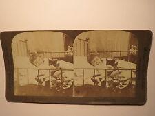 Tabby and I Is Chums - 1893 - Kind mit Katze im Bett / Stereofoto