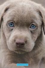Keith Kimberlin Poster-yeux bleus chiot-Nouveau Adorable Chiot Poster GN0848