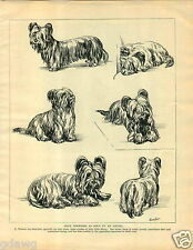 1930 Book Plate Dog Print Skye Terrier Sketches E Watson Roland Mrs Morgan