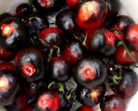 """TOMATE """"Azul de Arizona"""" schwarze Früchte,sehr würzig,lecker,unreif blaue Frucht"""