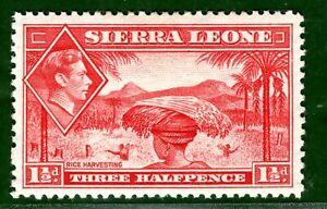Sierra Leone 1936 1.5d scarlet fine fresh LMM SG.190 cat £20 scarce value BLUE79