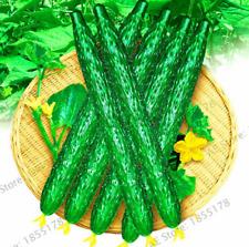 Long Cucumber 100 Pcs Seeds Bonsai Chinese Organic Vegetable Fruit Plants Garden