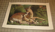 """""""DEER AND FAWN"""" CURRIER & IVES 11"""" x 16"""" Calendar PRINT from 1963"""