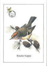 FDC 2424 - Oiseau Buzin sur gravure format A4 !