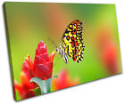 Butterfly Flowers Animals SINGLE CANVAS WALL ART Picture Print VA