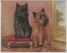 1930's-40's Vintage Darling Dog Print Cairn Terriers