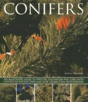 Conifers, Andrew Mikolajski, New condition, Book