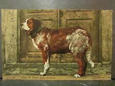 cpa chien du grand st bernard dog