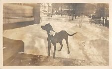 Large Dog (Mix Breed?) In Snow Covered Yard Real Photo Postcard V20283