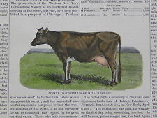 The Cultivator & Country Gentleman, in-text illustration #36 Jersey Cow