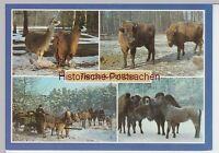 (96186) AK Cottbus, Tierpark, Mehrbildkarte, 1986