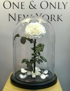 Forever Rose in Glass Dome Beauty And The Beast Preserved Eternal Gift Mother'sW