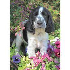 Springer Spaniel Lindo Perro en jardín de flores Animal Magic tarjeta en blanco adentro