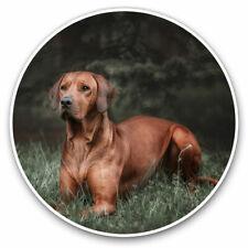 2 x Vinyl Stickers 25cm - Rhodesian Ridgeback Dog Cool Gift #16679