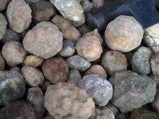 Geodes, Whole, Unopened - (25) small Kentucky Geodes