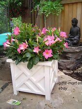 White plastic Square box lattice Chippendale garden patio planter plant flower