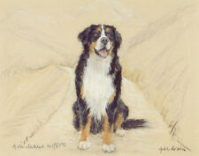 More details for bernese mountain dog fine art limited edition print bmd swiss berner sennenhund