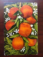 1909 US Postcard Scott #331 California Oranges Los Angeles to Holdrege, NE
