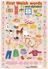 Educational Poster First Welsh Words and Alphabet Teaching Resource (0170)
