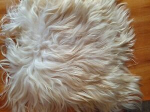 ICELANDIC SHEEPSKIN Cream with a Brown shade Chair Car Seat COVER Dog Cat Bed