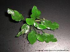 Anubias nana Wrinkled leaf - Live Aquarium Plant RARE