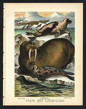 Harp Seal, Walrus, Crested, Vintage 1897 Chromolithograph Print, Antique, 025