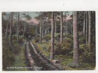 In The South Wood Troon 1910 Postcard 166b