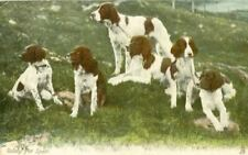 Old Rare Tuck's Postcard 6 Munsterlander Dogs c1908 England Ready for Sport
