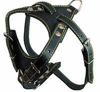 """Real Leather Dog Harness, 24.5""""-28"""" Chest size, 3/4"""" Wide, Brittany Spaniel"""