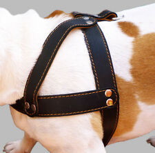"""Genuine Leather Dog Harness 1.5"""" wide 28""""-34"""" chest Pitbull Rottweiler Boxer"""