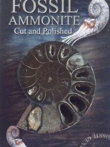 FOSSILE AMMONITE BLACK CONFEZIONE ELEGANCE ortocerato archeologia paleontologia