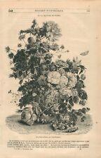 Vase de Fleurs par Jan van Huysum Peintre des Pays-Bas Hollande  GRAVURE 1844