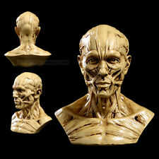 Human muscle body model Skull anatomical model skeleton replica Medical teach