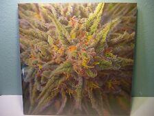 Granddaddy GDP Weed Marijuana Cannabis 3-D Lenticular Hologram Hanging Wall Art