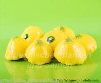 YELLOW SCALLOP * Zucchini gelb * Kürbis * 5 Samen