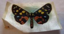 Cigarette Tobacco Silk of Butterfly