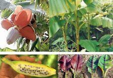 toller Set: drei verschiedene leckere Bananensorten
