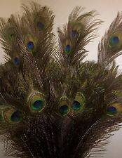 """10* Natural Peacock Eye Feathers For Floral Decorations- 31-33"""" / 79-84 cms Long"""
