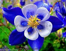 300 Columbine Seeds Aquilegia Caerulea Vulgaris Mixed Colors Hardy Flower Fresh