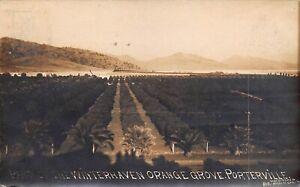 CA 1911 California Orange Grove San Joaquin Valley Porterville - Tulare County