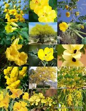 Yellow Flower Plants Mix exotic garden tree fragrant bonsai bloom seed 15 seeds