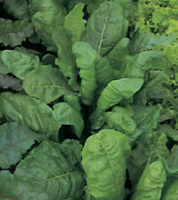SPINACH PERPETUAL Erbette ORGANIC SEED Tasty. Nutritious. Long harvest. Easy.