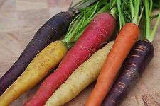 RAINBOW BLEND MIX CARROT Daucus Carota Vegetable Seeds (50 Seeds) X-057