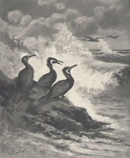 CORMORANT BIRDS CATCHING FISH SEA BIRDS ANTIQUE ENGRAVING ART PRINT 1898