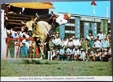 CANADA ALBERTA - POSTCARD - CALGARY STAMPEDE - BRAHMA BULL RIDING