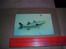 Miami FL Snook fishing mounted taxidermy game fish popular food angled sport