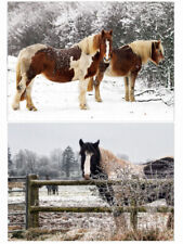 More details for pack of 20 horse christmas cards - pack f