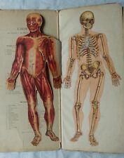 RARE L'homme, ses muscles, ses organes, son squelette, planches chromos Lelièvre